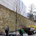 Neue Bäume für die Kölner Straße.