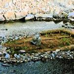 Ein Stein mit Gesicht fasziniert auf der angelegten Insel vor der Oberstadtbrücke.